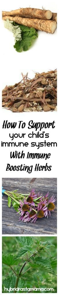 Do you know how to properly support your child's immune system with immune boosting herbs? Grab this recipe for the best immune boosting tea blend there is. Brought to you by HybridRastaMama.com.