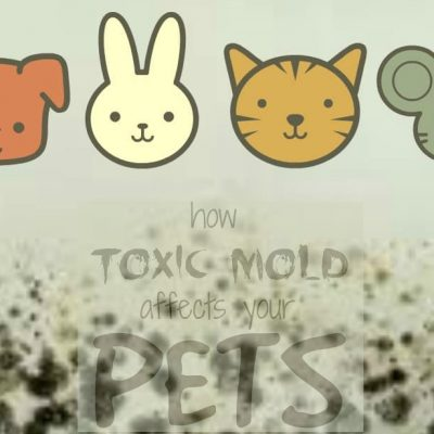 How Toxic Mold Affects Pets