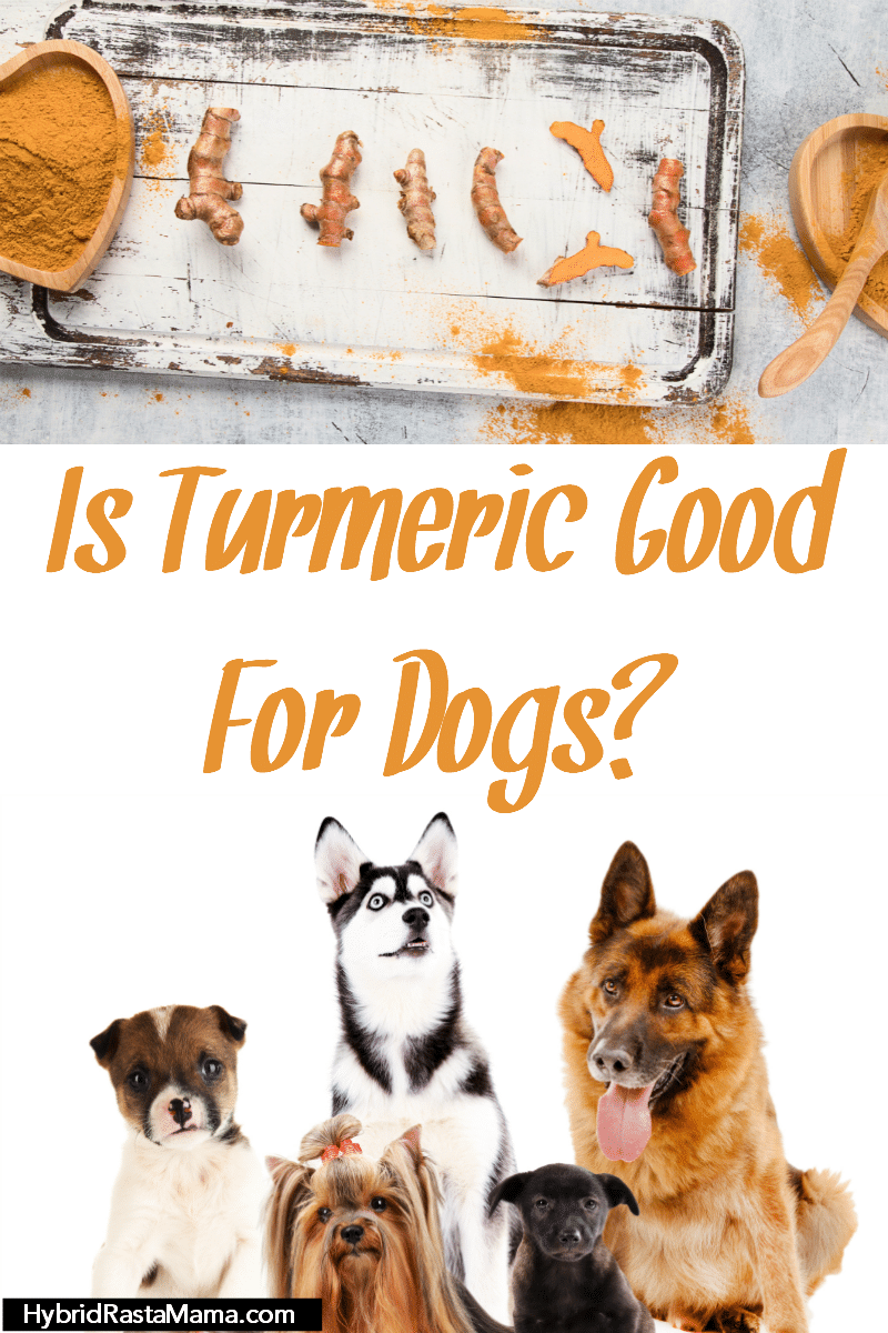 A sweet bunch of dogs wondering if turmeric is good for them