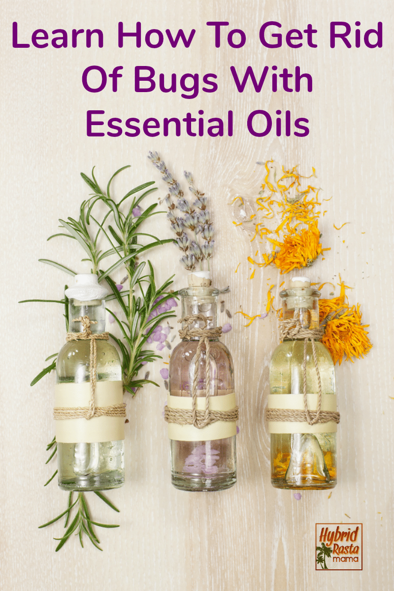 Three bottle of essential oils for natural pest control