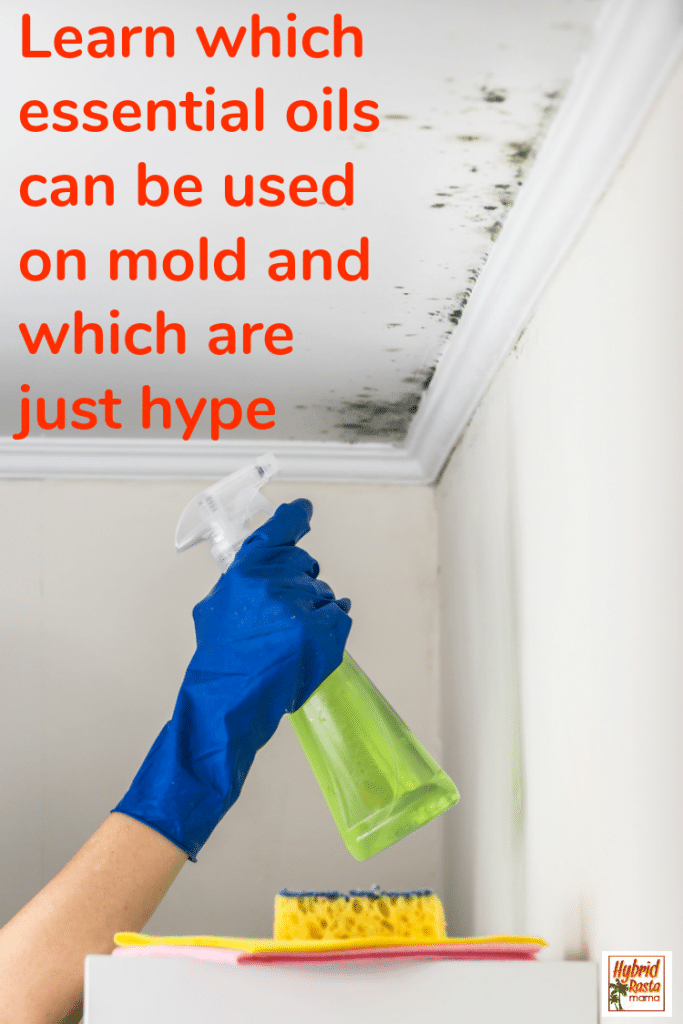 A blue gloved hand spraying a moldy ceiling with essential oil mold spray