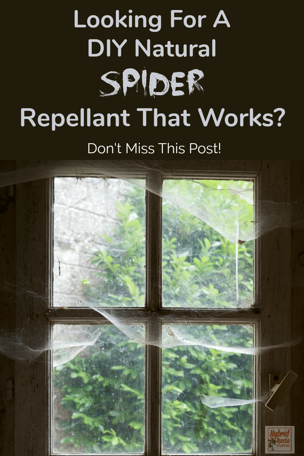 "A window with cobwebs in it and a text overlay that says ""looking for a DIY spider repellent that works?"""