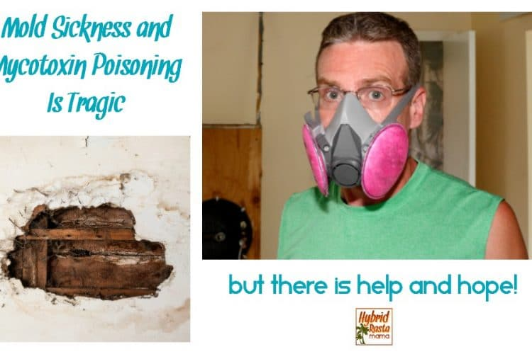 Mold sickness & mycotoxin poisoning is a tragedy no one wants to go through. But there is help and hope. Empower yourself with the information in this post from HybridRastaMama.com.