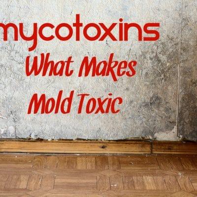 Mycotoxins – What Makes Mold Toxic