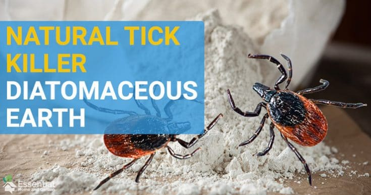 Kill Ticks Naturally With Diatomaceous Earth
