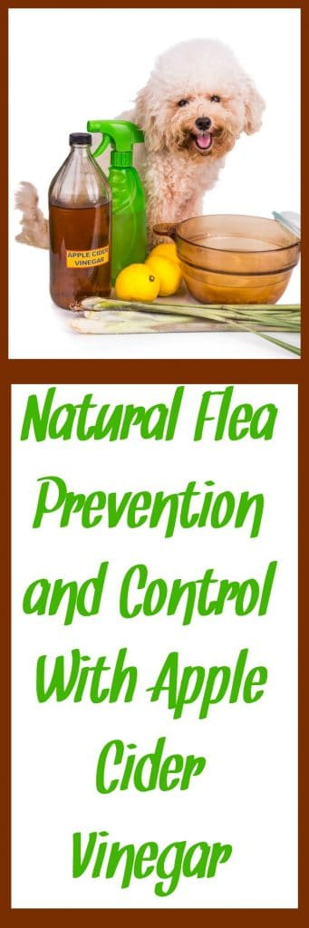 Learn more about natural flea prevention and control in this post. With a focus on apple cider vinegar, fleas will leave your fur babies alone for good! From HybridRastaMama.com.