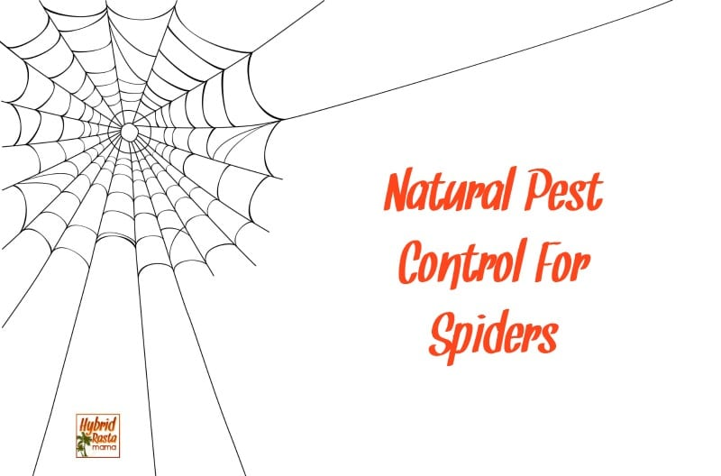 Looking For Ways To Keep Spiders Away Naturally Coconut Oil Herbs And Essential
