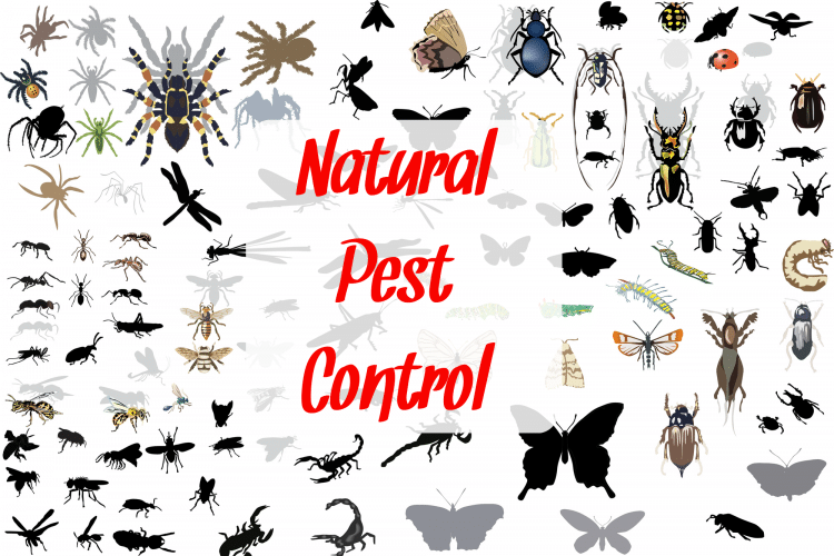 Insects of all kinds representing natural pest control