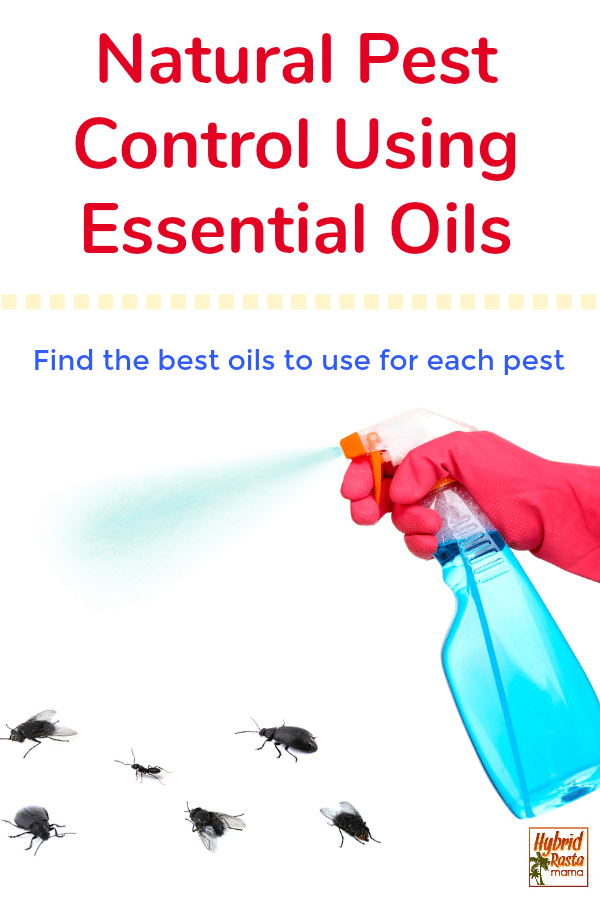A spray bottle filled with essential oils for natural pest control