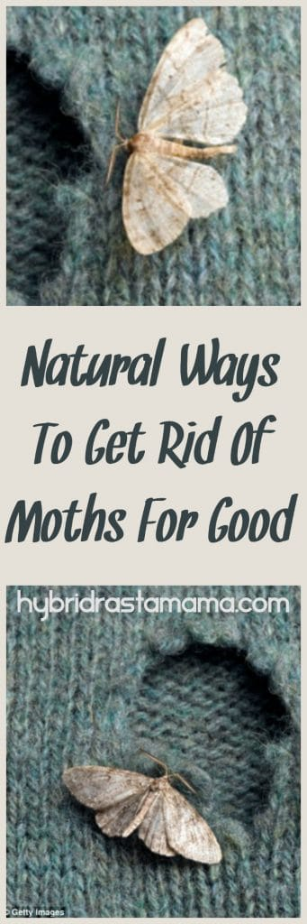 how to get rid of moths in the home