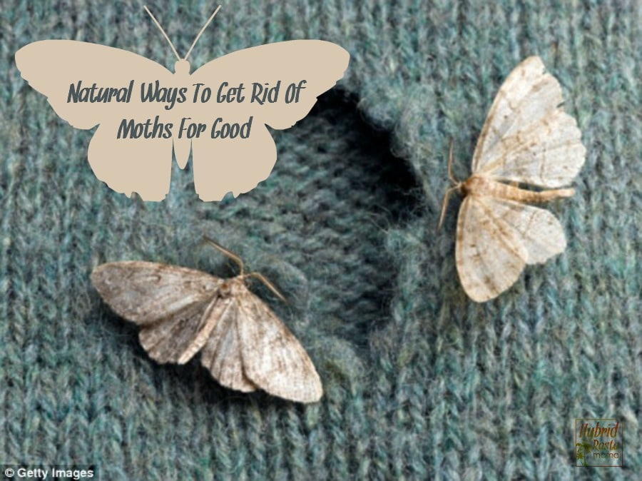 Natural Ways To Get Rid Of Moths
