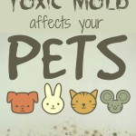 How Toxic Mold Affects Your Pets