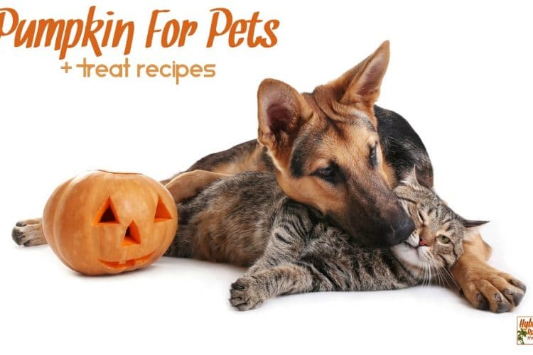 A German Shepherd is cuddling a tabby cat next to a carved pumpkin. Pumpkin for Pets + treat recipes is written above them.