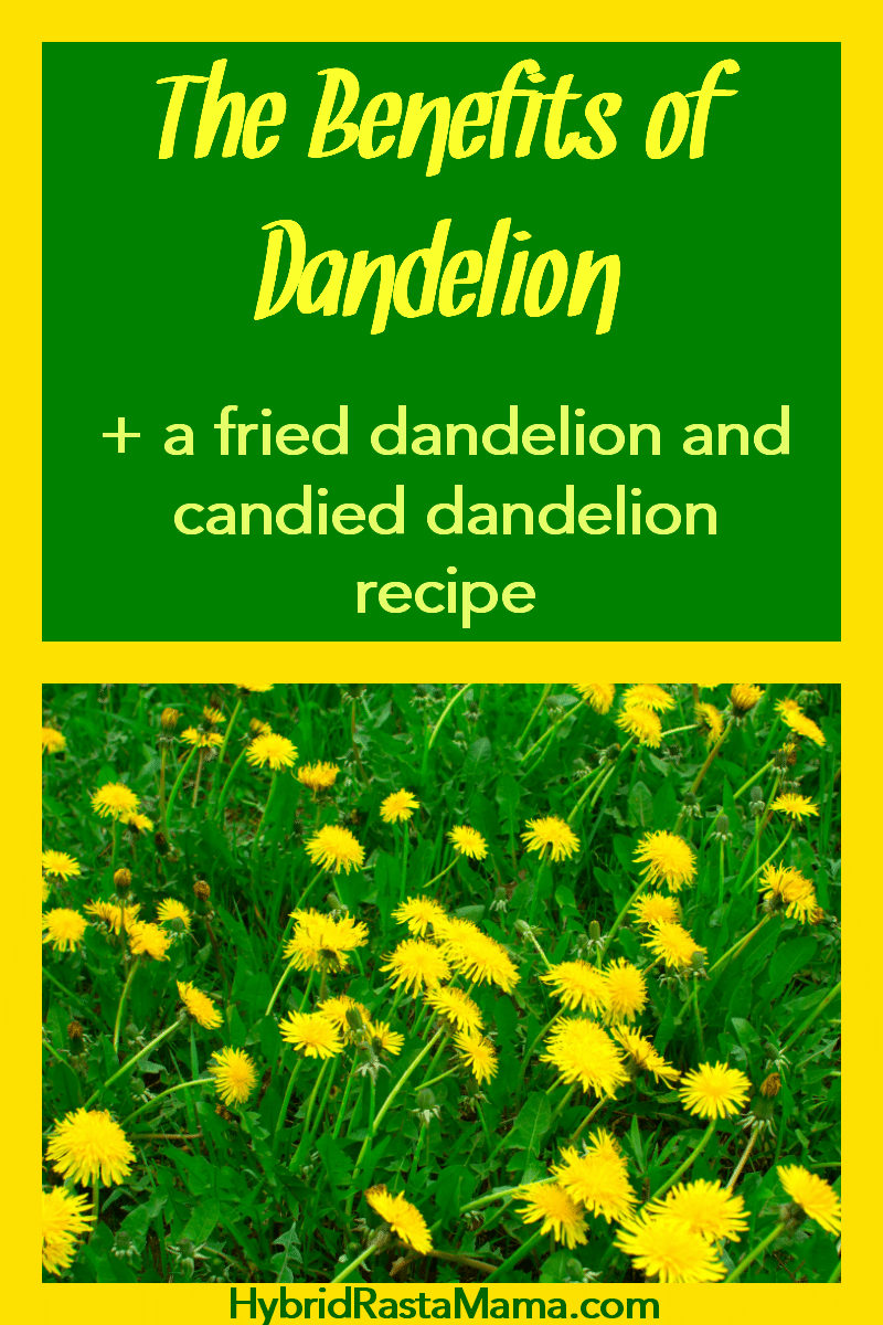 A field of dandelion flowers and greens