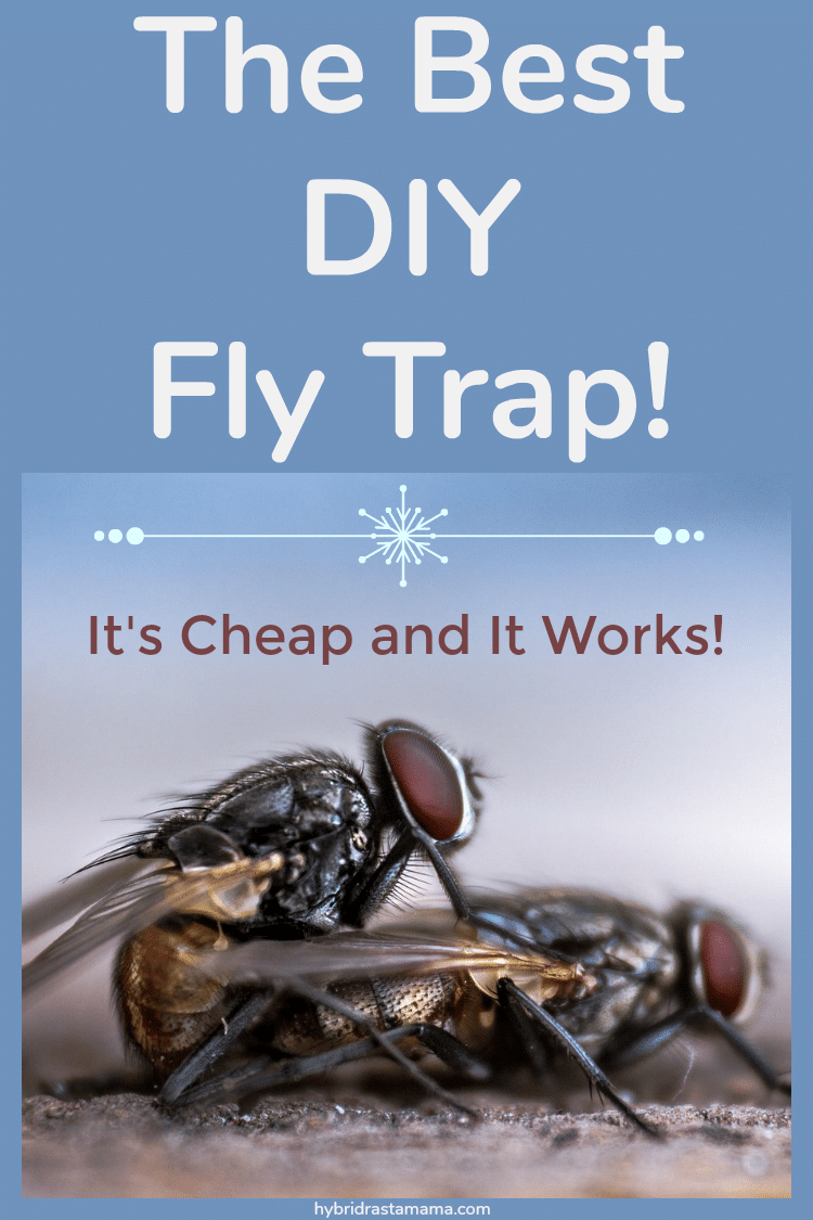 two flies stuck on a DIY fly trap