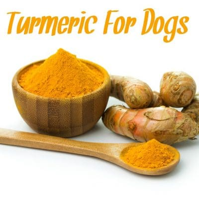 Is Turmeric Good For Dogs?