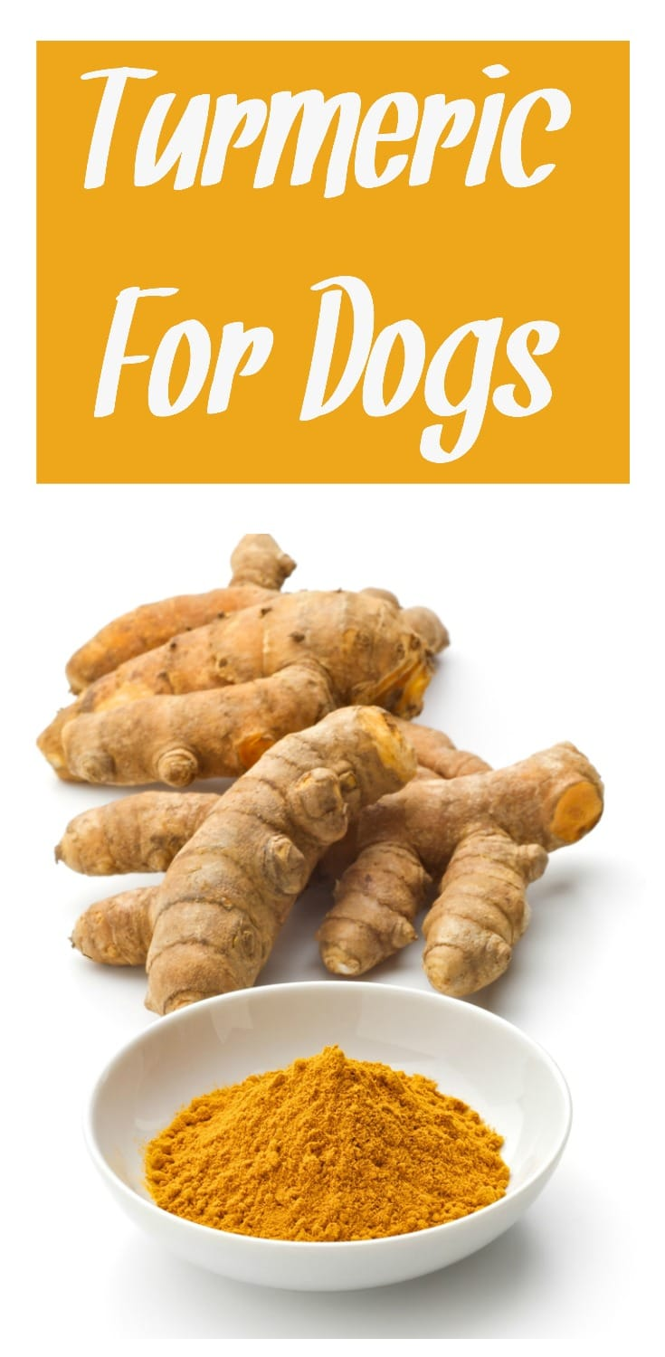 Looking to care for your pooch in the most holistic manner possible? You definitely want to learn more about using turmeric for dogs. This post gives you all the basics and more! From HybridRastaMama.com