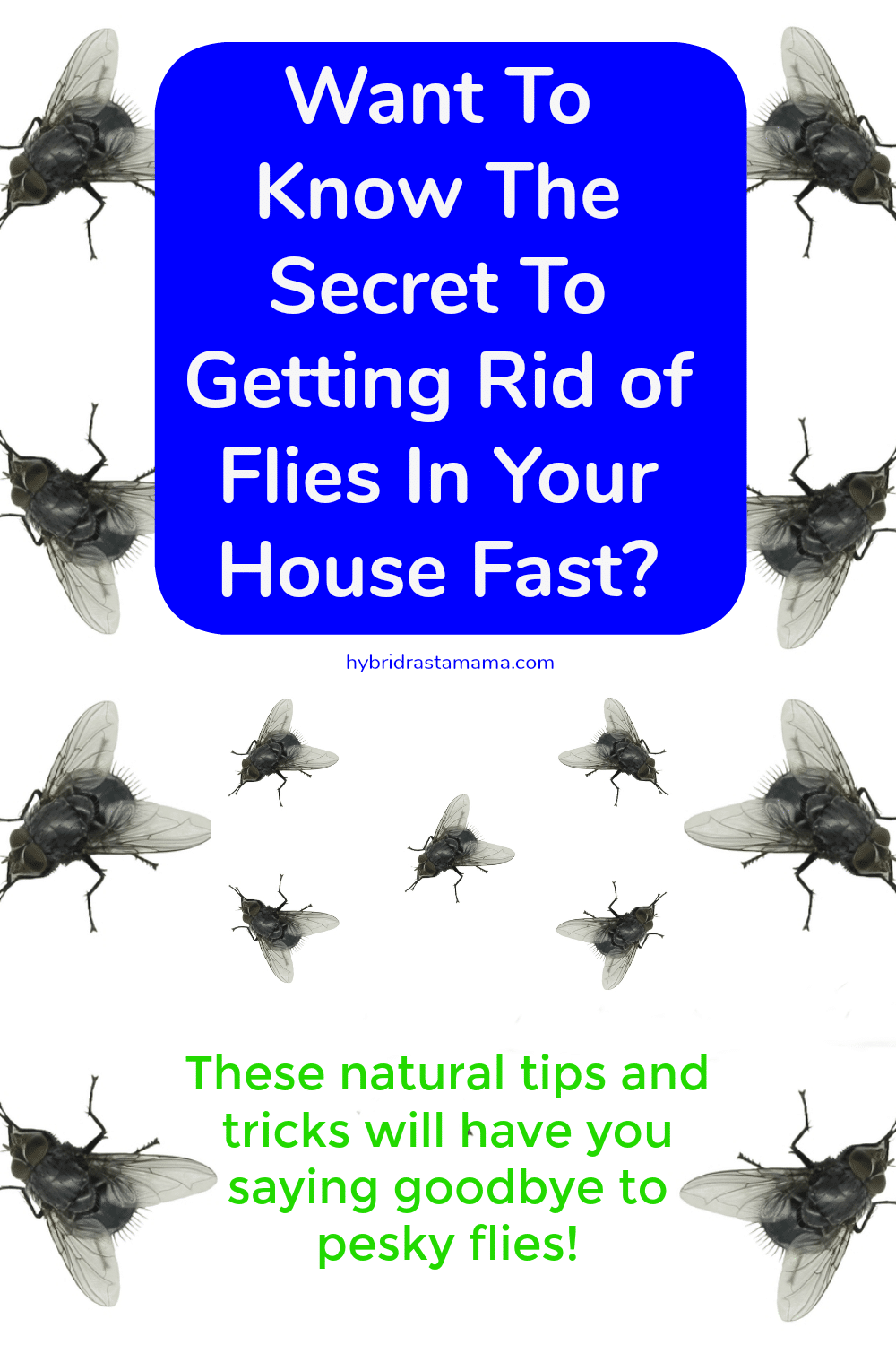 "houseflies on a white background with the words ""the secret to getting rid of flies in your house fast."""