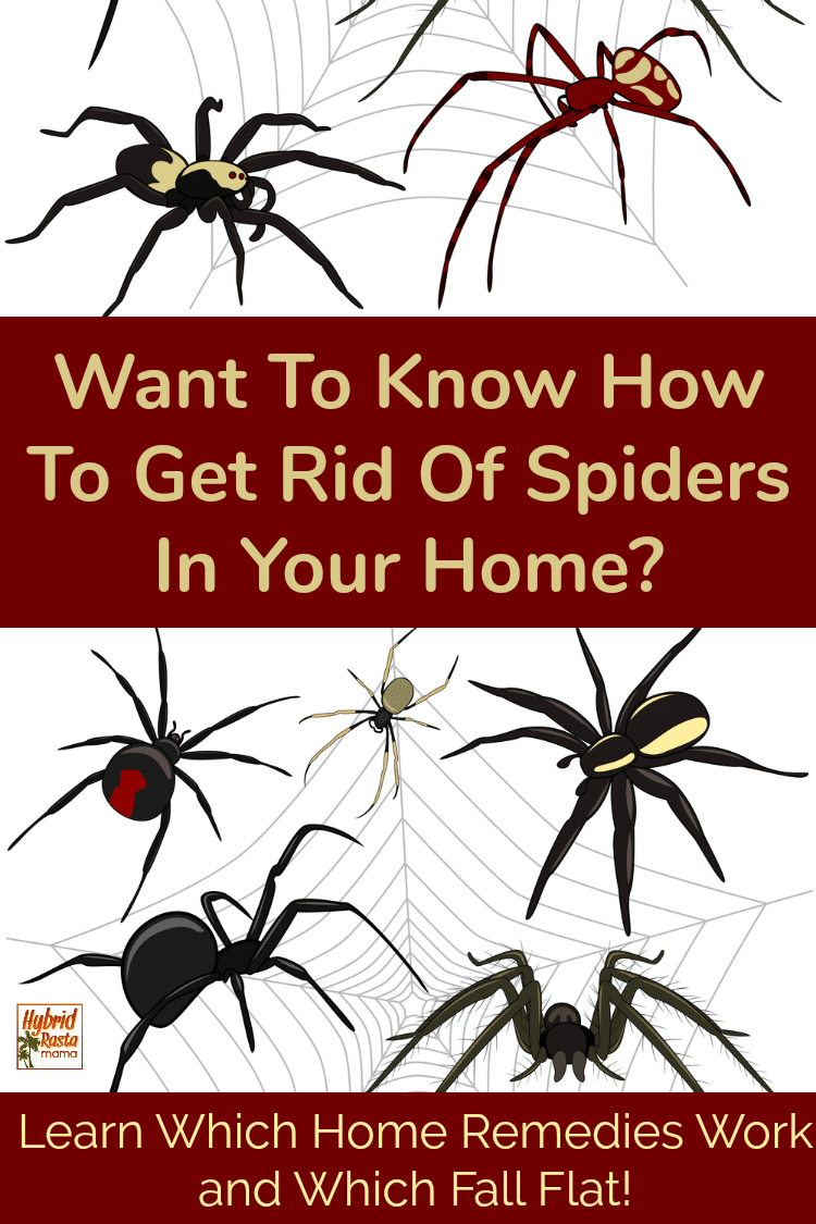 "Various vector spiders with the text overlay of ""want to know how to get rid of spiders in your home?"""