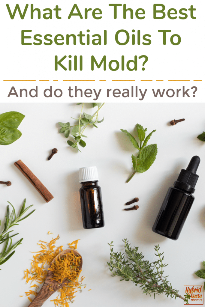 A collage of various herbs and essential oils to kill mold