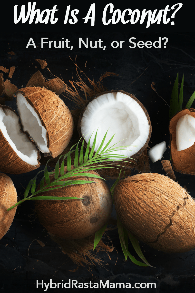 "An assortment of coconuts on a dark background. They beg the question, ""what is a coconut?"""