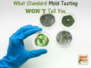 4 mold testing petri dishes with cultures on them.