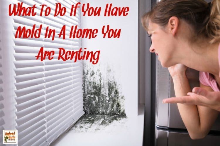 What To Do If You Have Mold In A Home You Are Renting