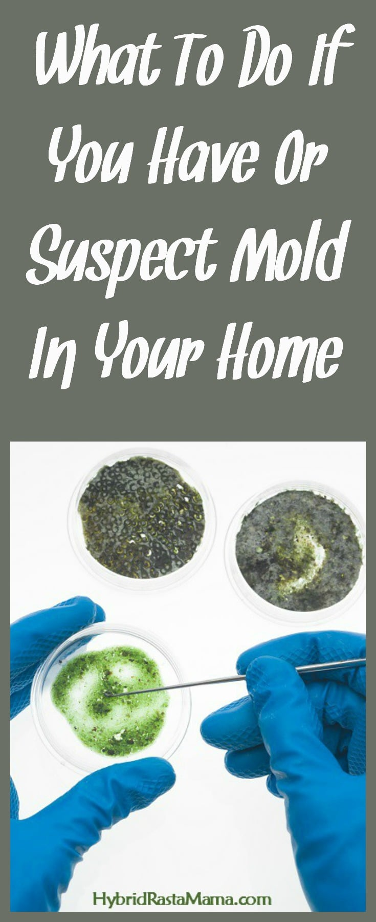 Suspect toxic mold in your home or workplace? Know for sure that you have a mold problem? Unsure where to start? This post outlines what tests to consider and what protocols to begin with. From HybridRastaMama.com.