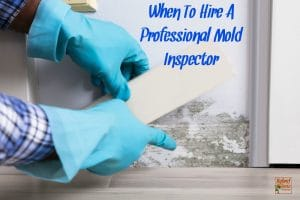 Walking Away From Toxic Mold – Why You Must Leave Everything