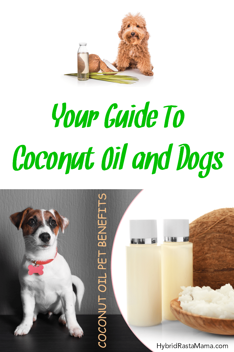 A cute fluffy dog next to a jar of coconut oil