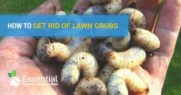 How To Get Rid Of Grubs - Tips From A Pro Gardener